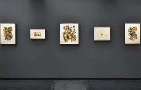 Alternating size of pieces of Irving Penn artwork framed by Bark Frameworks at Hamiltons Gallery