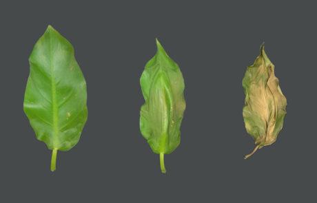 Leaf Shrinks and Twists