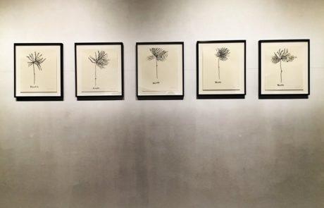 Elizabeth Enders at Real Art Ways Five Drawings of Plants