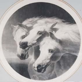 Image of Three Horses Copied from Mid 19th Century Print