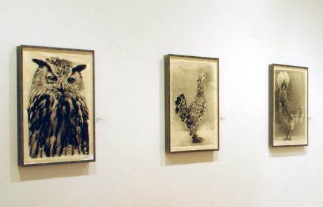 Jean Pagliuso Exhibition at Marlborough Gallery Raptor Portraits