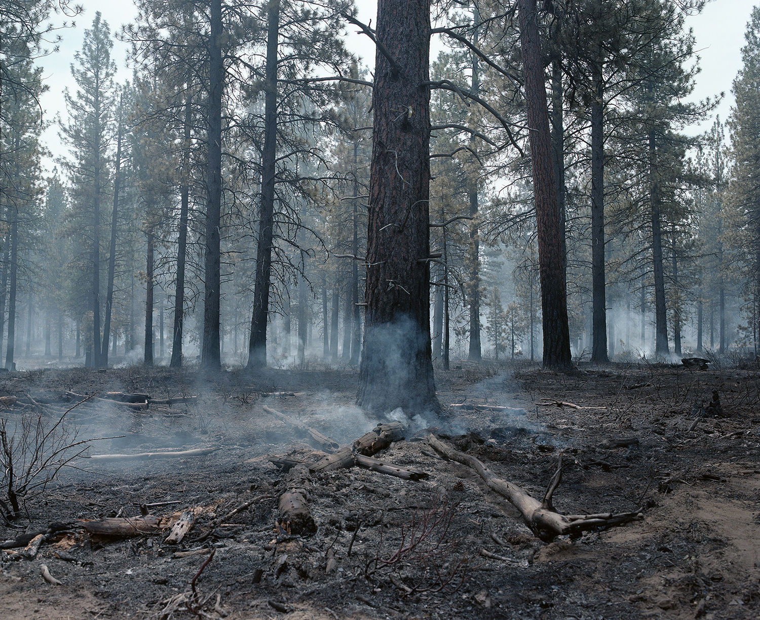 Katie Truisi Photograph Controlled Burn Outside of Bend Oregon 2018